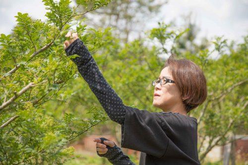 木 の 方 山椒 の 育て
